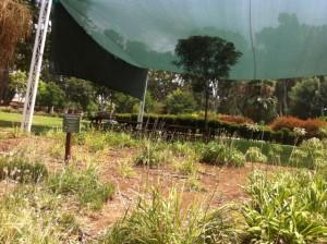 גן בוטני נהריה נגישות